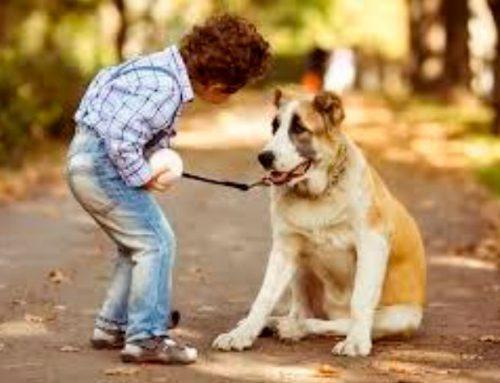 Por que as pessoas consideram os cães como membros da família ?