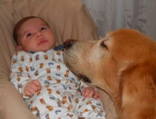 PETS, uma fonte de bem-estar desde a infância